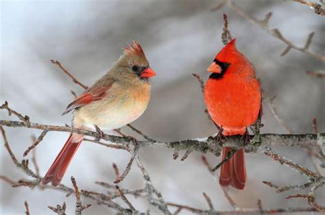 birds survive storms   harsh weather