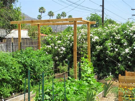 Andie's Way Tomato And Bean Trellis  Andie's Way It