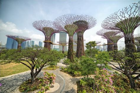 gardens by the bay are gardens by the bay s supertrees really the future of