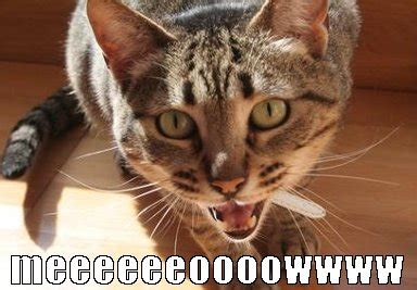 Cat Meow Meme - fireworks maze funny cat memes and caricature for online casino real money image 3761495