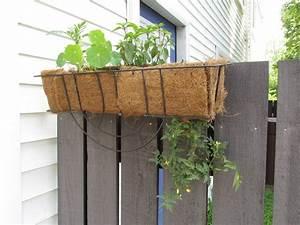 Feng Shui Pflanzen Reichtum : h ngende tomaten pflanzen ideal f r den balkon ~ Markanthonyermac.com Haus und Dekorationen