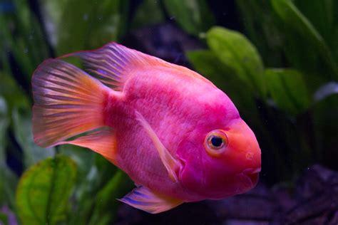 Pink Fish Underwater Cuteness  Incredible Cuteness