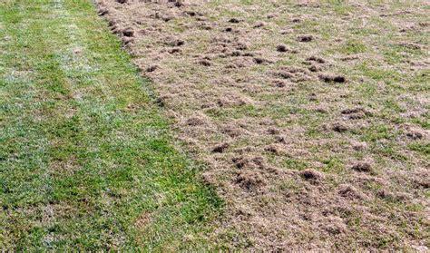 Wann Soll Den Rasen Vertikutieren by Rasen Vertikutieren L 252 Ften Sanden Was Ist Wann Am