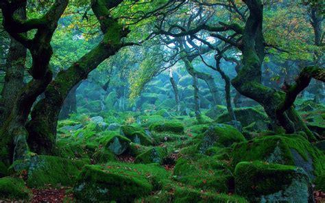 landscape forest widescreen wallpapers 25732 baltana