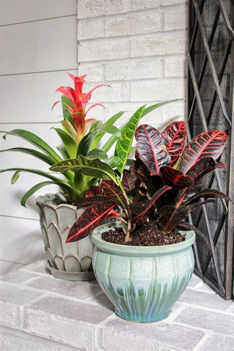 Best 25+ Indoor Tropical Plants Ideas On Pinterest