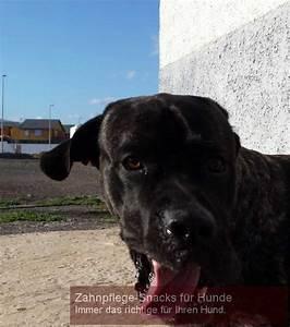 Hunde Sachen Kaufen : zahnpflege snacks f r hunde n tzliche sachen f r den hund ~ Watch28wear.com Haus und Dekorationen