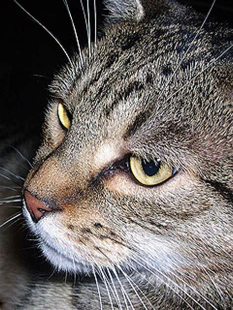 katze tiere handy hintergrundbilder kostenlos