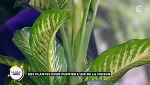 Assainir L Air De La Maison : des plantes pour purifier l air de la maison youtube ~ Zukunftsfamilie.com Idées de Décoration