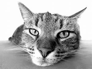 Katzen Fernhalten Von Möbeln : 10 tipps das kannst du machen wenn deine katze berall hinpinkelt katzenkram ~ Sanjose-hotels-ca.com Haus und Dekorationen