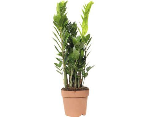 exotische zimmerpflanzen kaufen zimmerpflanzen  wien