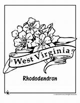 Virginia Coloring West Flower State Rhododendron Drawing Printable Indiana Wvu Tattoo Wv Template Football Decal Flowers Classroomjr Jr States Activities sketch template