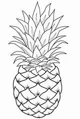 Pineapple Coloring Fruit Template Printable Pinapple Sheets Raskraska Adult Fruits sketch template