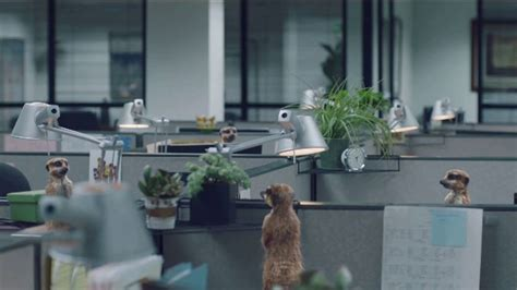 geico tv commercial meerkats spread office gossip