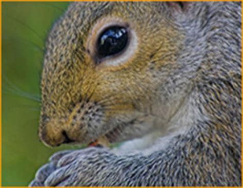 Animal Removal Pest Wildlife Control Chula Vista