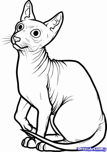 Cat Sphynx Draw Egyptian Coloring Pages Step