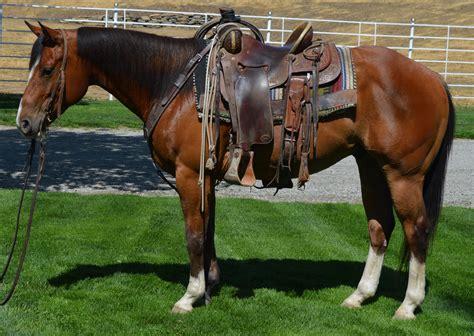 quarter horses aqha bay mac boston gelding cash arizona bartender porter chex