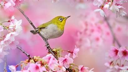 Spring Desktop Bird Birds Wallpapers