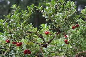 Gardening, Expert, Native, Plants, Help, Cape, Cod, -, News, -, Barnstable, Patriot