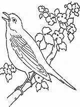 Pages Coloring Canary Printable Birds Colors Mycoloring Recommended sketch template