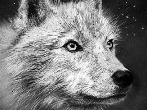wolf drawing pencil sketch colorful realistic art