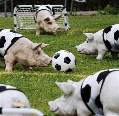 classement des meilleurs cuisine du monde photo des cochons qui jouent au humour