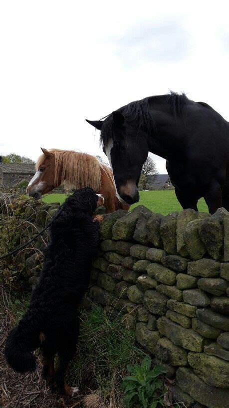 dogs horses he pets thinks bigger loves they