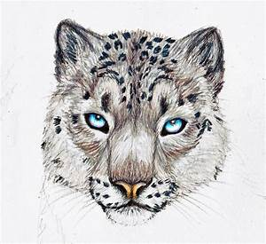 75  How To Draw A Snow Leopard Head