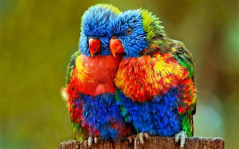 small colorful parrots wallpapers hd wallpaperscom