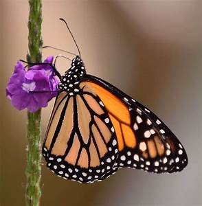 See Butterflies Spread Their Wings For Spring In This Week