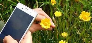 Blumen Erkennen App : pflanzen per app bestimmen die besten tools ~ A.2002-acura-tl-radio.info Haus und Dekorationen