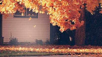 Fall Animated Nature Gifs Animations Falling Leaves