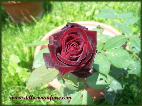 immagine fiore rosa sfondi per il desktop a tema floreale sfondi di natale
