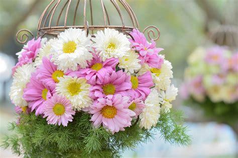 วอลเปเปอร์ : ธรรมชาติ, เบ่งบาน, สีชมพู, ปลูก, กลีบดอก ...