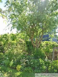 Taille Du Saule Pleureur : la taille du saule tortueux les jardins de malorie ~ Melissatoandfro.com Idées de Décoration
