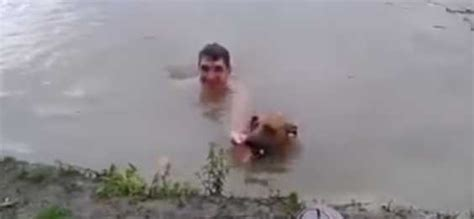 dog thought owner  drowning quickly jumps  water