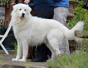 list of mountain breeds with pictures 101dogbreeds