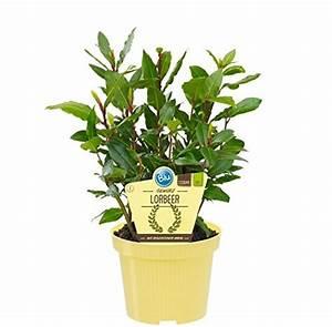 Kräuter Pflanzen Topf : pflanzen und andere gartenausstattung von unsere ~ Lizthompson.info Haus und Dekorationen