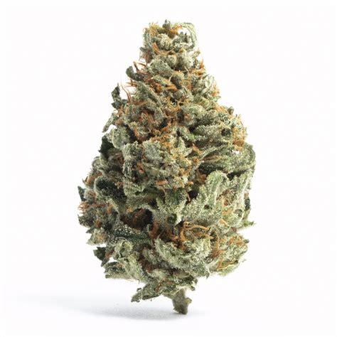 chocolope aka   marijuana strain information leafly