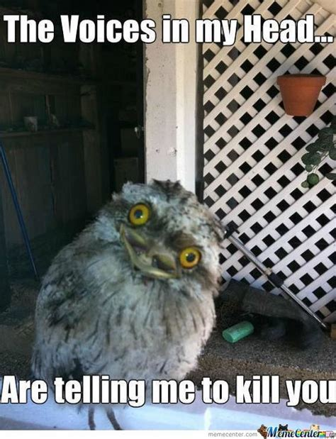 Crazy Bird Meme - crazy bird lady memes best collection of funny crazy bird lady pictures