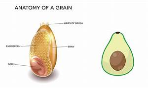 Wheat-grain-avocado