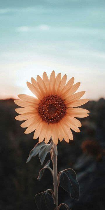 fondos bellos  el celu sunflower iphone wallpaper