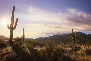 [az landscape] - 28 images - interior home design desert