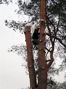 Was Kostet Baum Fällen : baum f llen und baumpflege in zweibr cken ~ Orissabook.com Haus und Dekorationen