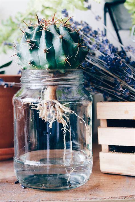 แคคตัสในขวดแก้ว ปลูกง่ายๆไม่ยุ่งยากทำเองได้ - my home