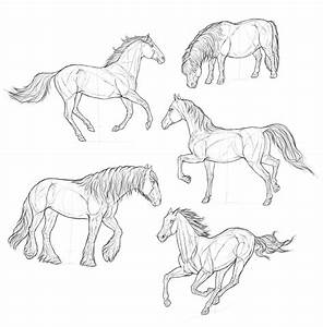 How To Draw A Horse Step By Step Realistic | www.pixshark ...
