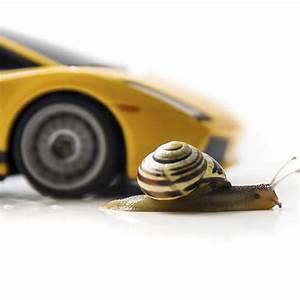 Assurance Petit Rouleur : conomies sur votre assurance auto ooreka ~ Medecine-chirurgie-esthetiques.com Avis de Voitures