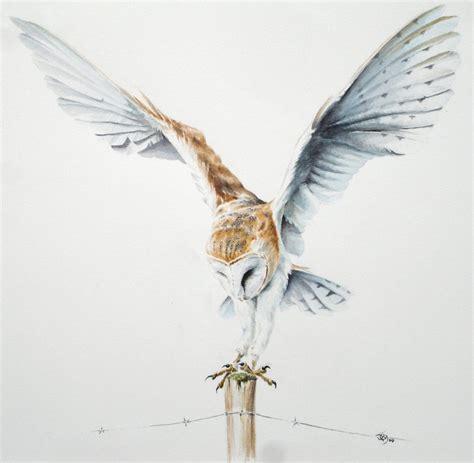 flying barn owl drawing barn owl flying drawing