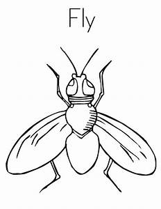 Fly Coloring Pages Images - Reverse Search