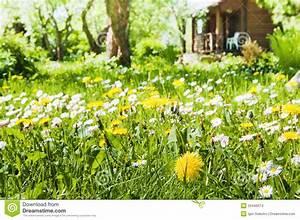Rasen Lüften Mit Lüfterwalze : rasen mit blumen stockbilder bild 25446074 ~ Yasmunasinghe.com Haus und Dekorationen