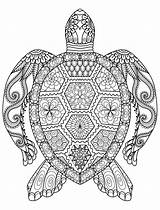 Coloring Adults Animal Turtle sketch template